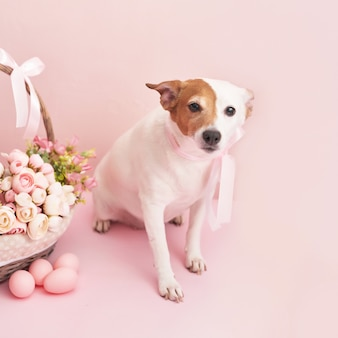 Lebkuchen, hund und eier.