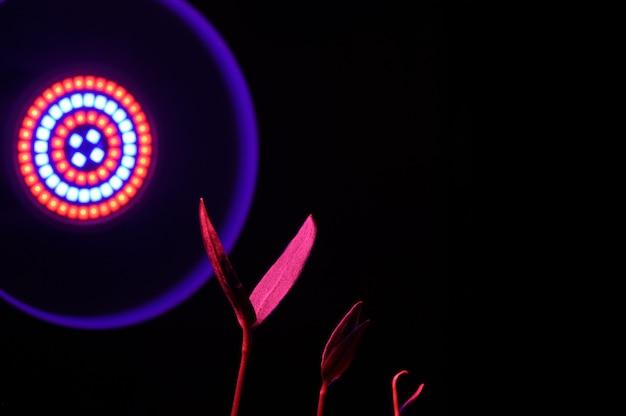 Led-phytolampe beleuchtet kleine pflanzensprossen in einem topf. nahaufnahme.
