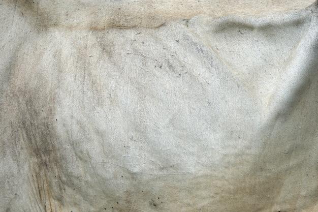 Leder auf den rippen der neugierigen kuh, die gras auf dem feld isst