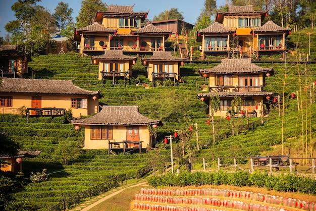 Lee wine ruk thaiyunnan lehmhaus im chinesischen stil inmitten von teeplantagen und kaltem wetter in den bergen von mae hong son vor thailand