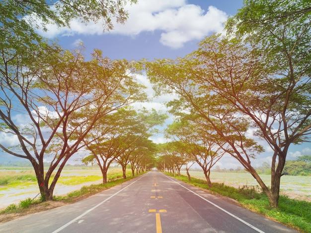 Leere autobahnstraße zwischen gummibaum mit sonnenstrahl, leerer weg mit kopierraum für hintergrund.