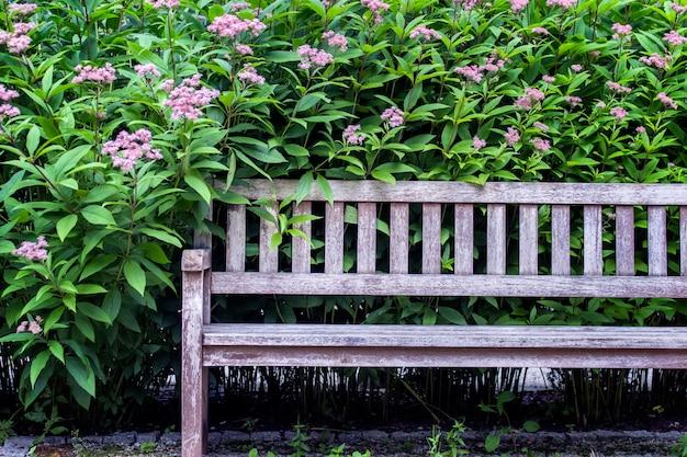 Leere holzbank im garten vor grünen mehrjährigen pflanzen.