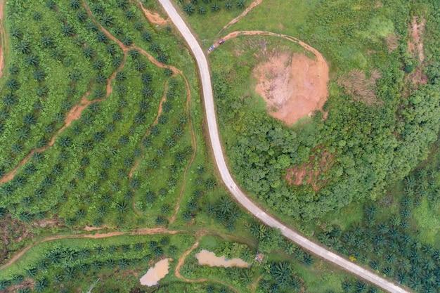 Leere kurvenstraße in der reihe des palmenplantagengartens auf hohem berg in phang nga thailand