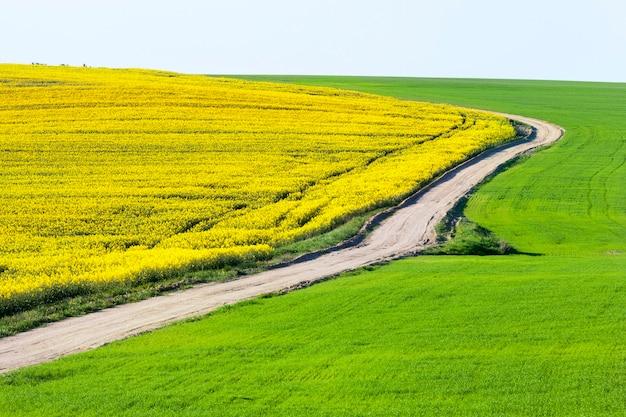 Leere landstraße durch die landwirtschaftlichen felder
