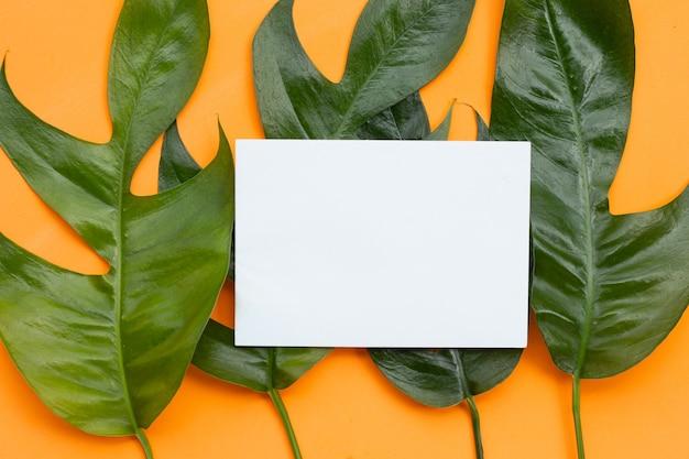 Leere papierseite auf monstera deliciosa liebm blätter auf orangem hintergrund.