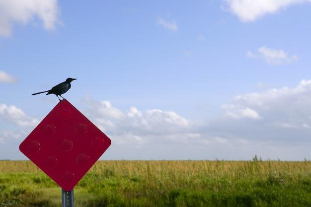 Leere schild und vogel drauf