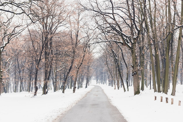 Leere straße mit schnee deckte landschaft im winter ab