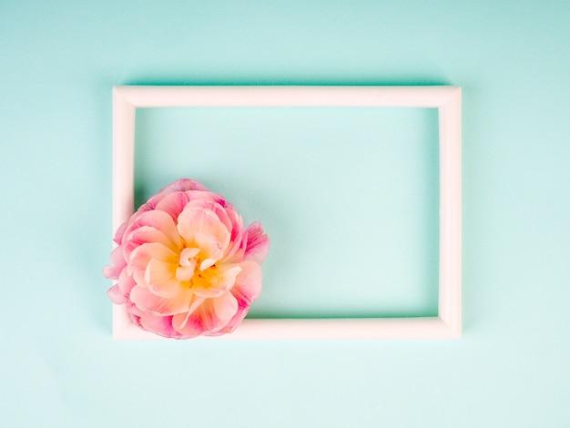 Leerer fotorahmen und weiße tulpe über blauem hintergrund