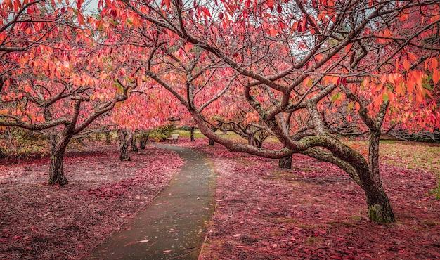 Leerer fußweg im garten mit kirschbäumen