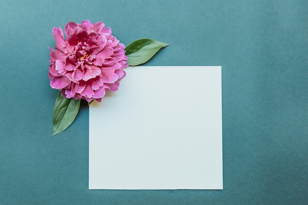 Leeres notizblockblatt und flache burgunderpfingstrose lagen auf blauem hintergrund