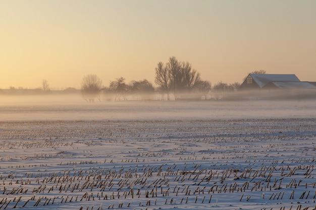 Leeres schneefeld mit nebel und bäumen in der ferne