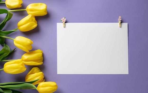 Leeres weißes papier mit wäscheklammern und tulpen auf einem lila hintergrund. feiertagsmodell mit gelben blumen.