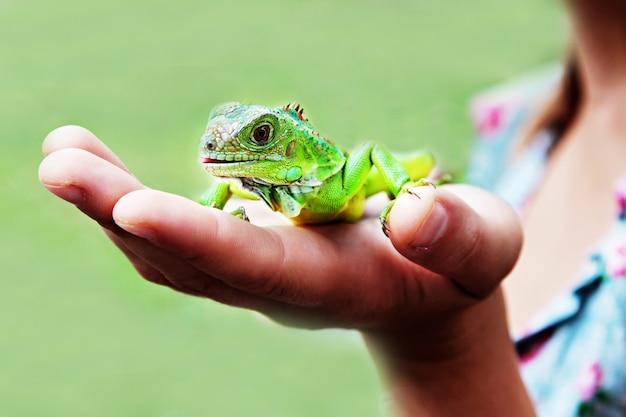 Leguan auf der hand