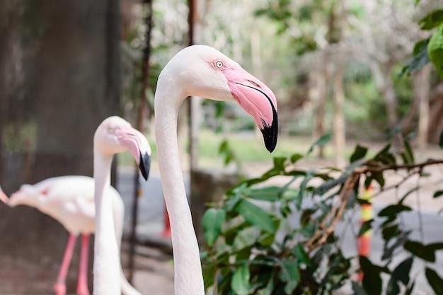Leiter von flamingo