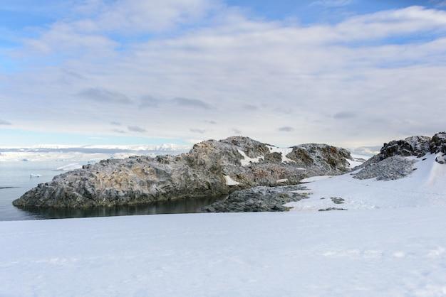 Leopardenrobbe am strand mit schnee in der antarktis