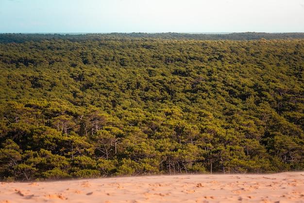 Les landes wald gesehen von der düne von pilat, bei arcachon, aquitanien, frankreich.