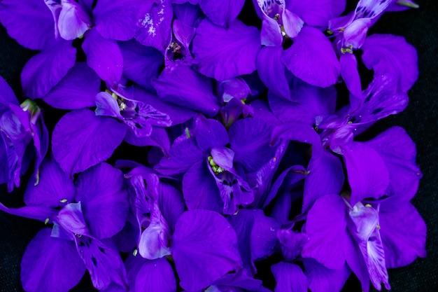 Leuchtend blaue ritterspornblumen auf schwarzem hintergrund für textkopierraum