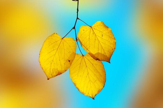 Leuchtend gelbblaue elegie. flacher dof