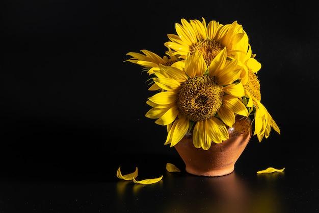 Leuchtend gelbe sonnenblumen im tontopf auf schwarzem hintergrund mit kopienraum für ihr design.