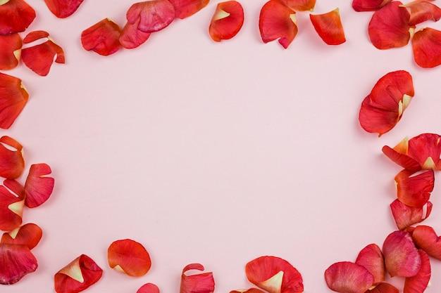 Leuchtend rote blütenblätter eines ranunkels auf einem rosa hintergrund in form eines rahmens