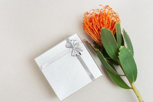 Leucospermum blume und silberne geschenkbox auf heller papieroberfläche