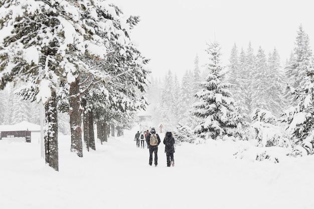 Leute, die auf schneebedeckte wälder gehen