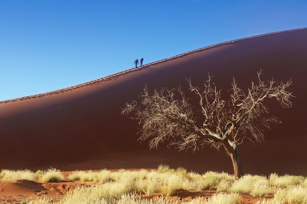 Leute, die auf schöne sonnenaufgangdünen von namibischer wüste, sossusvlei, namibia, südafrika gehen