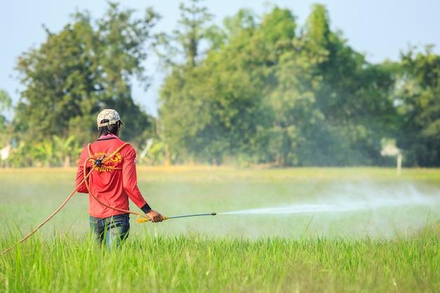 Leute, die chemikalie zum grünen jungen reisfeld sprühen