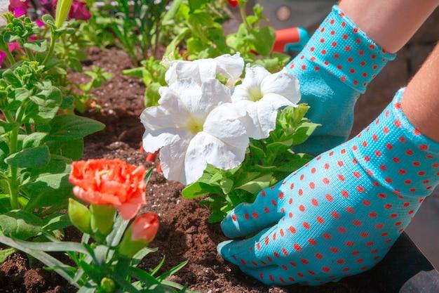 Leute, gartenarbeit, blumenpflanzen und beruf - nah oben vom frauen- oder gärtnerhandpflanzen