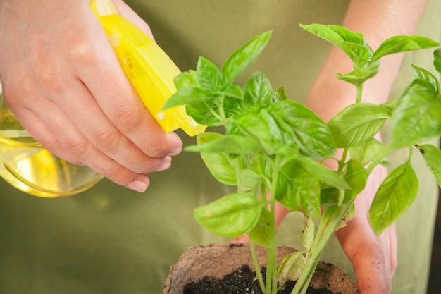 Leute, gartenarbeit, blumenpflanzen und berufkonzept - nah oben vom frauen- oder gärtnerhandpflanzen