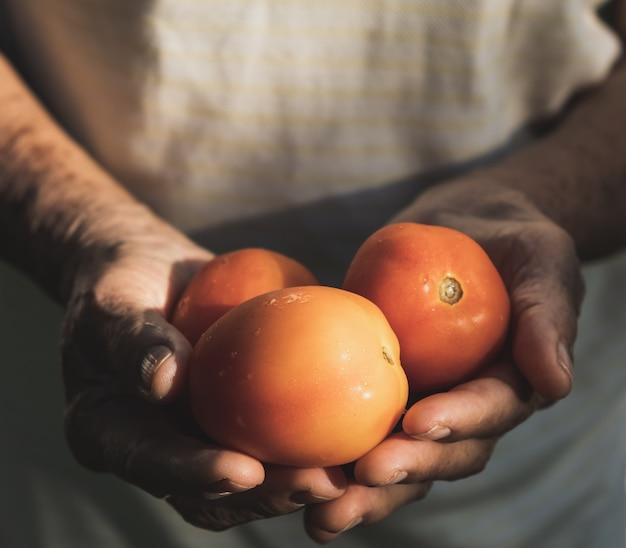 Leute holdung tomate in der hand