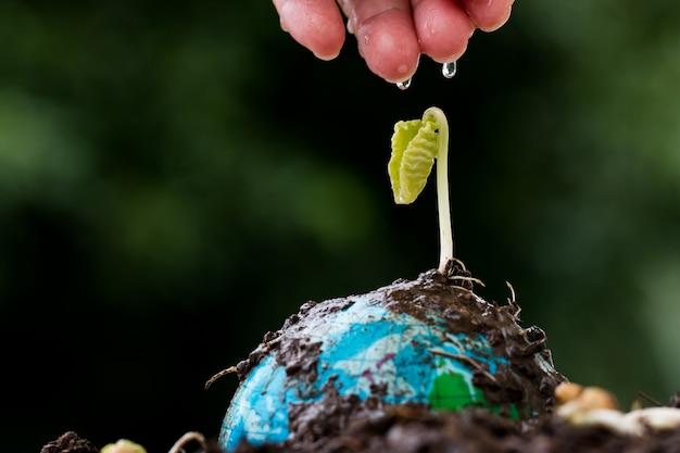 Leutehände, die junge sämaschine auf kugelmodell am regnen des sonnigen tages wässern. speichern sie ökologietag der grünen welt umwelt. leben auf der erde, neuentwicklung für unternehmensführungskonzept