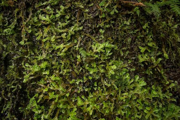 Levada von caldeirao verde