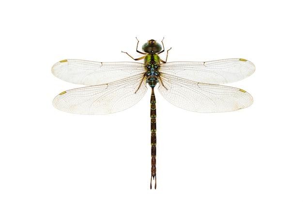 Libelle auf einem weißen hintergrund