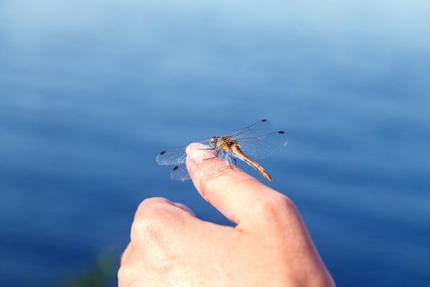 Libelle, die, sitzend auf einer frauenhand stillsteht