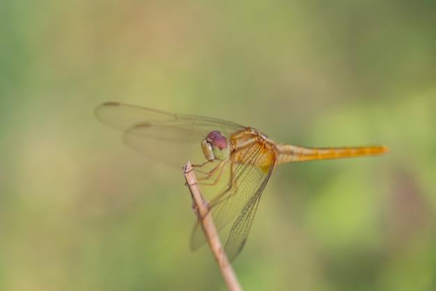Libelle gehockt auf eine niederlassungsoberseite des baums