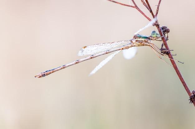 Libelle im abschluss oben