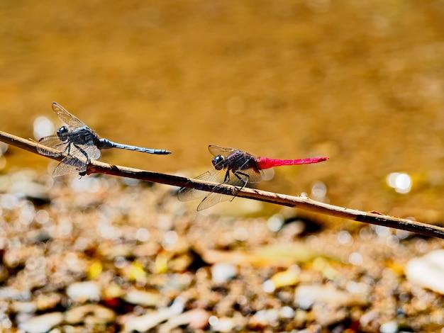 Libelle in der natur schöner flügel der libelle