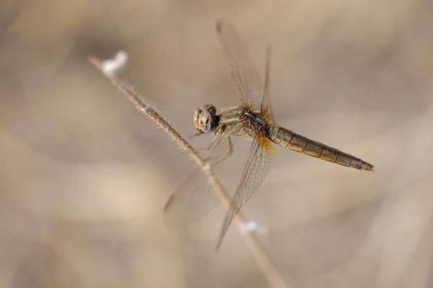 Libelle in ihrer natürlichen umgebung.