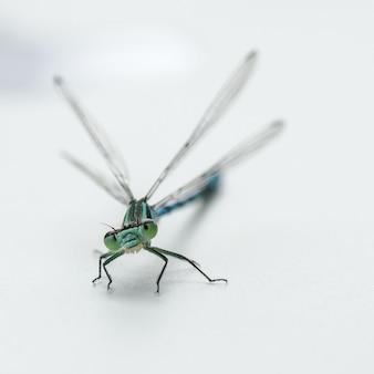 Libelle lokalisiert auf einem weißen hintergrund