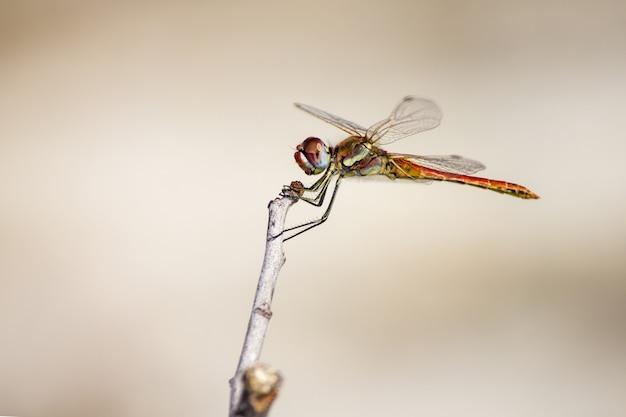 Libelle sitzt auf stamm nah oben