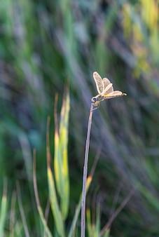Libelle thront auf einem ast