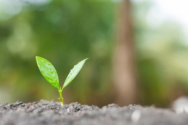 Licht der jungpflanze, die morgens mit grünem natur bokeh hintergrund wächst