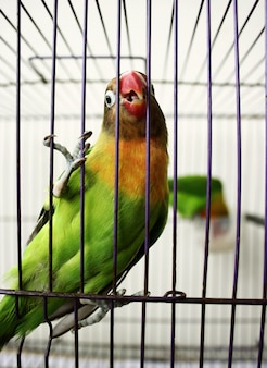 Liebe vögel in einem käfig