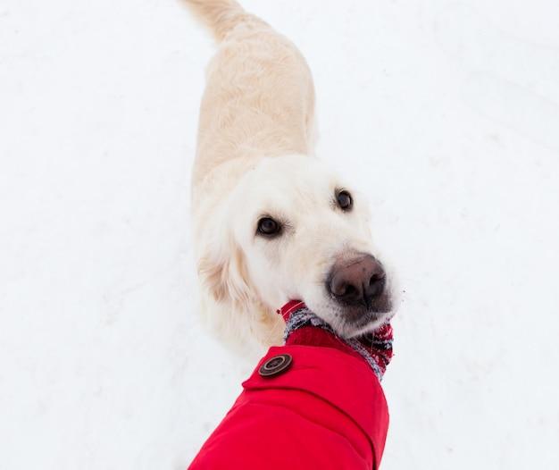 Liebe zu haustieren - selfie-porträt eines schönen großen hundes auf einem winterspaziergang
