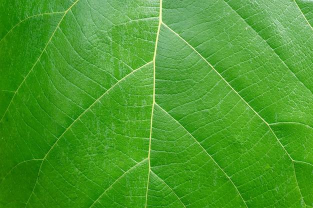 Lieben sie das erdkonzept. grünes blatt hintergrund