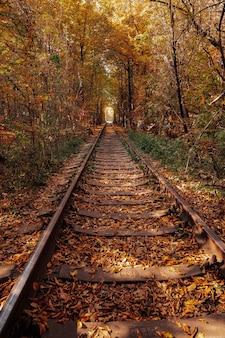 Liebestunnel im herbst. eine eisenbahn im frühlingswald