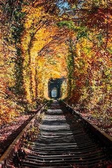 Liebestunnel im herbst. eine eisenbahn im herbstwald. tunnel der liebe, herbstbäume und die eisenbahn
