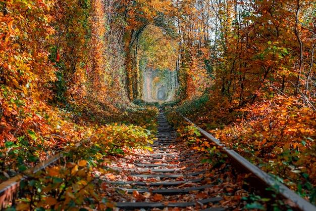 Liebestunnel im herbst. eisenbahn und tunnel von bäumen