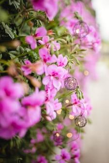 Lila blühende pflanze